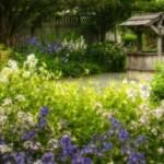 Ładny ogród